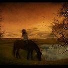 Wild horses by MarieG