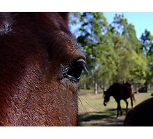 close inspection Photographic Print