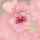 Sweet As Sugar Candy.... by Sharon House