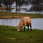 Grazing in the Mud by Steph Peesker
