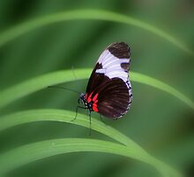 Tiny Butterfly by Chris Coates