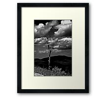 Single Tree Framed Print