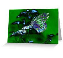 Beautiful Butterfly on flower Greeting Card