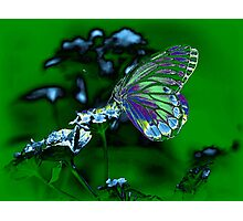 Beautiful Butterfly on flower Photographic Print