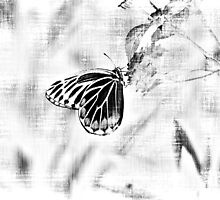 Vintage Beautiful Butterfly on flower - Black and White by Nhan Ngo
