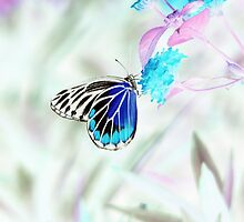 Beautiful Butterfly on flower - Negative Photo by Nhan Ngo