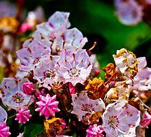Pink Wildflower by GalleryThree