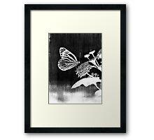 Vinatge Butterfly on flower - Black and White Framed Print