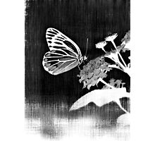 Vinatge Butterfly on flower - Black and White Photographic Print