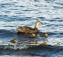 Mama Duck With Her Babies by Cynthia48