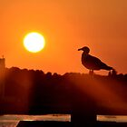 Sunset Gull by Robin Lee