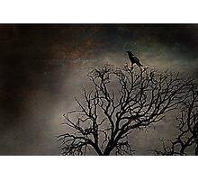 Black Bird Fly Photographic Print