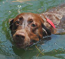 Taking a Dip by Robin Black