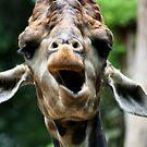 Giraffe Talk  by KelseyGallery