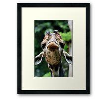 Giraffe Contemplation Framed Print