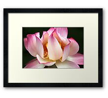 Glowing the Lily  Framed Print