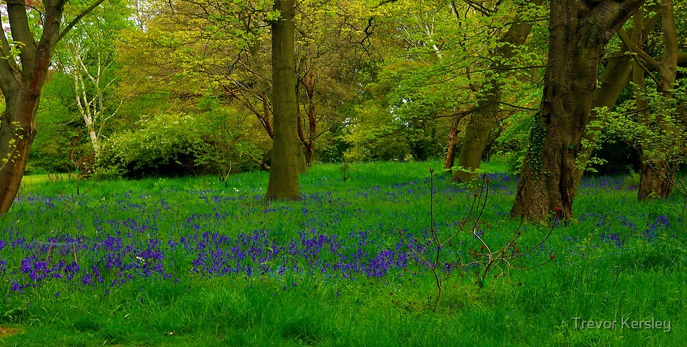 Bluebell Glade by Trevor Kersley
