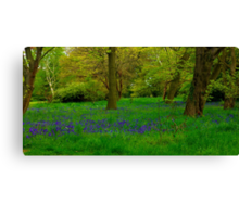 Bluebell Glade Canvas Print