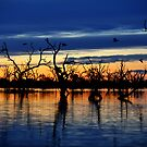 Reflections of the Day, Menindee Lakes, NSW by Matt Harvey