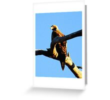 Wedge Tailed Eagle This is the partner to the other Greeting Card