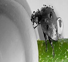 Love Bug by Mark Walton