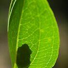 Silhouette of frog by Kenji Ashman