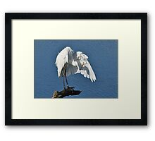 Fluffing His Feathers - Great Egret Framed Print