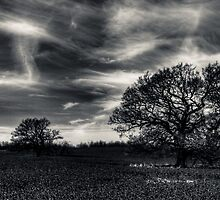 Ghost Sky by William Rottenburg