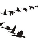 Geese flying in the shape of unit by gepard