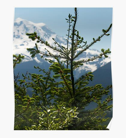 Fir Tree and Mt. Rainier Poster