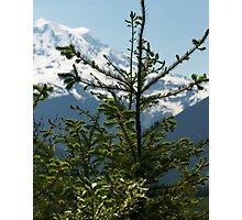Fir Tree and Mt. Rainier Photographic Print