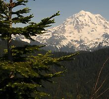 Mt Rainier with Spruce Tree by BH Neely