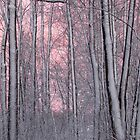 Pink Twilight Behind Snow Covered Trees by Sagenahb