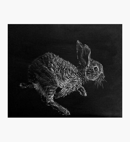 Young White-tailed Jack Rabbit Photographic Print