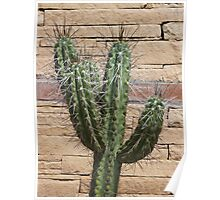 Prickles and Bricks Poster