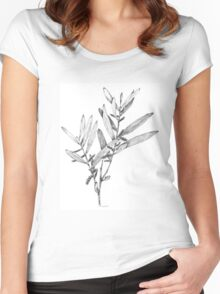 Wattle- Acacia sophorae Women's Fitted Scoop T-Shirt