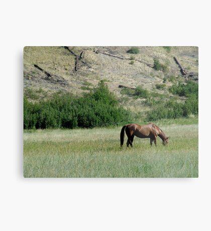 HORSE IN A MONTANA PASTURE Metal Print
