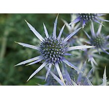 Spikes of Blue  Photographic Print