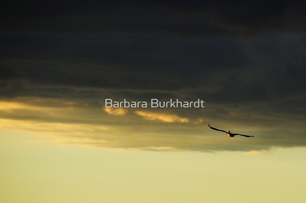 Last Flight of the Day by Barbara Burkhardt