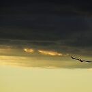 Last Flight of the Day by Barbara Burkhardt