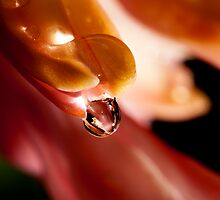 Dew drop by Jim Butera