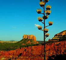 Sedona, AZ by JoAnn Glennie