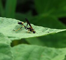 Black and Yellow Mud Dauber by Ron Russell