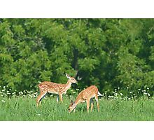 Fawns in field of flowers Photographic Print