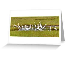 Marsh Egret Party Greeting Card
