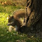 Brown Squirrel by njumer