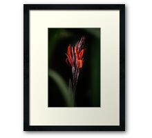 Can Na In Garden Framed Print