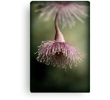 Belle of the ball Canvas Print