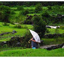 Lush Green, White Umbrella  by stilledmoment