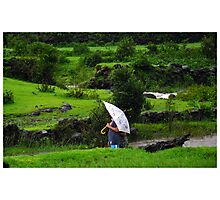 Lush Green, White Umbrella  Photographic Print